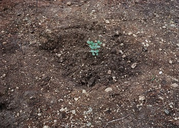 Gaston Zvi Ickowitcz, Planting #8, 2016, Archival pigment prints, 43.5 x 53 cm, EKARD COLLECTION